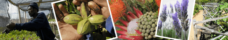 Gardening, Horticulture and Botany